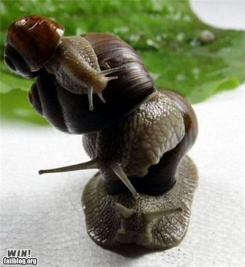 balance,balancing,mother nature ftw,snails
