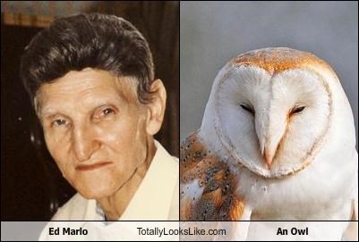 Ed Marlo Totally Looks Like An Owl