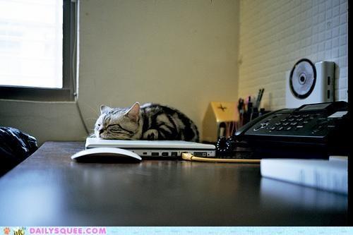 acting like animals,cat,equation,happy,kitten,laptop,math,mathematics,nirvana,refracted,sleeping,sunbeam,warmth