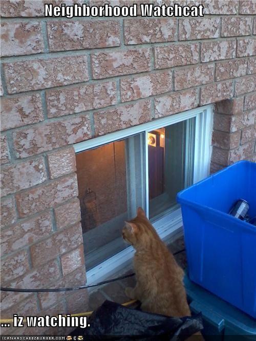 Neighborhood Watchcat  ... iz watching.