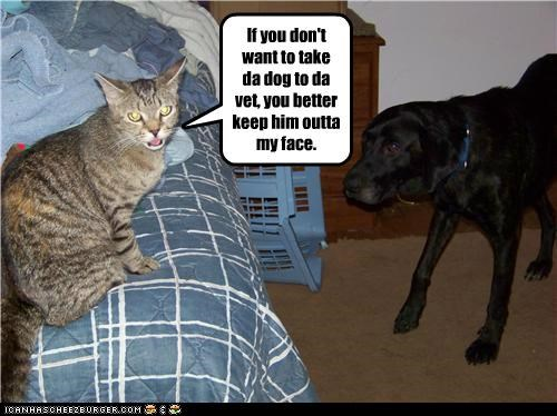 If you don't want to take da dog to da vet, you better keep him outta my face.