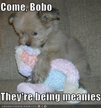 couch,cuddling,mean,puppy,scared,toy,whatbreed