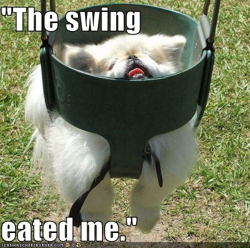 """The swing  eated me."""