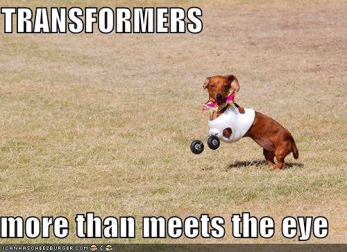 best of the week,dachshund,disabled,feet,handicapped,legs,new legs,outdoors,playing,running,scarf,transformers,wheels