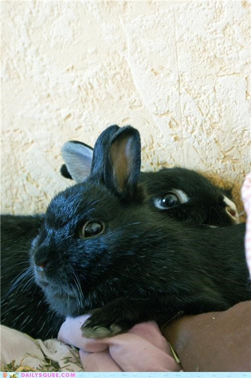 bunnies,bunny,love,lovely,name,names,quarreling,rabbit,rabbits,reader squees,sisters