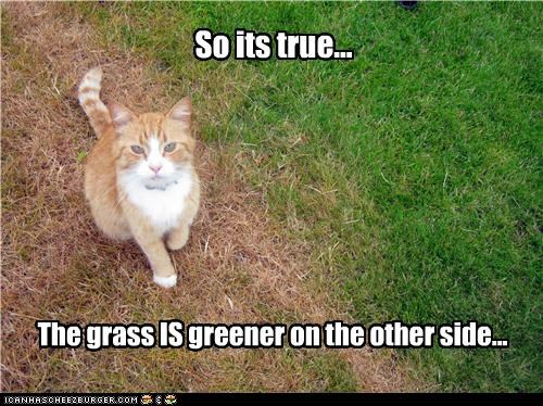 adage,caption,captioned,cat,grass,greener,other,side,true,truth