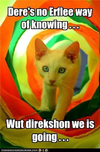Willy Wonka Kitteh