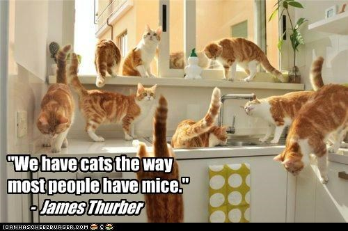 """We have cats the way  most people have mice."""