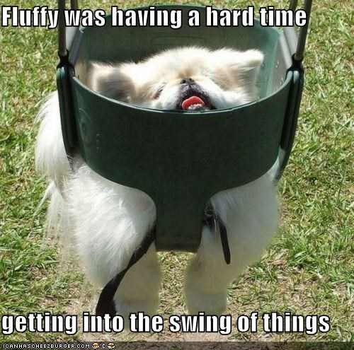 Fluffy was having a hard time  getting into the swing of things