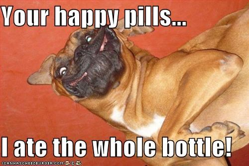 funny,happy,happy pills,mastiff,silly,smiling