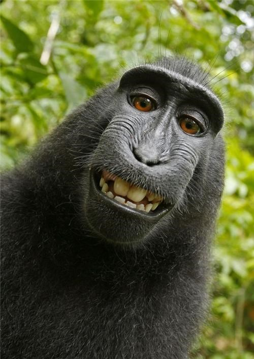 Simian Self-Portrait of the Day