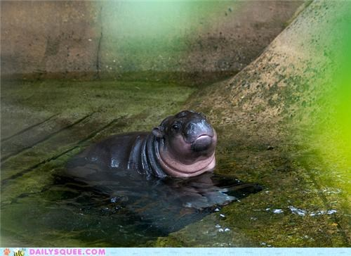 Squee Spree: Stay Cool, Hippo