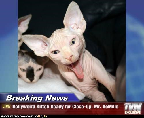 Breaking News - Hollyweird Kitteh Ready for Close-Up, Mr. DeMille