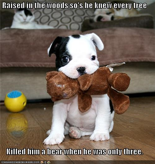 best of the week,black and white,couch,pitbull,teddy bear,toys
