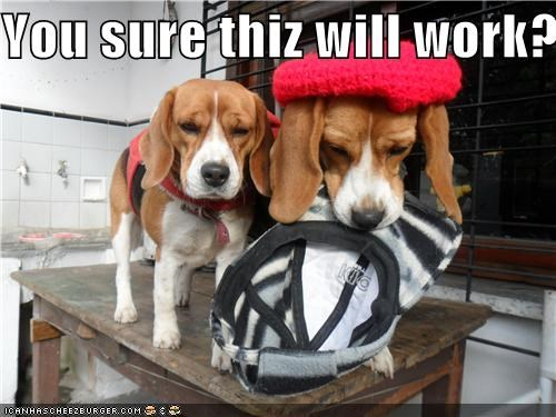 beagle,beagles,clothing,experimenting,hats