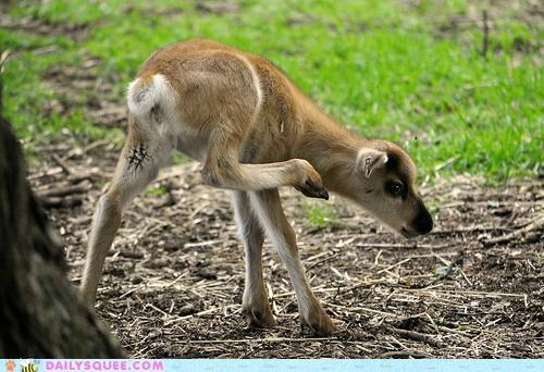 adorable,amplifier,Awkward,baby,calf,cute,daww,dawwkward,neologism,reindeer,squee,whatsit,whatsit wednesday