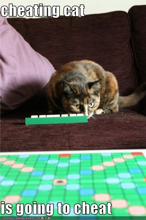cheating cat  is going to cheat