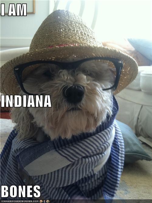 clothing,glasses,hat,impression,Indiana Bones,Indiant Jones,scarf,whatbreed
