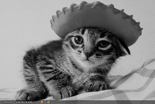 black and white,cowboy,cowboy hat,cyoot kitteh of teh day,hats