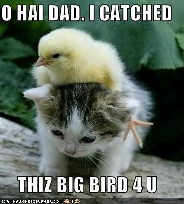 O HAI DAD. I CATCHED  THIZ BIG BIRD 4 U