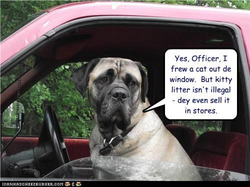 car,driving,mastiff,officer,police,pulled over