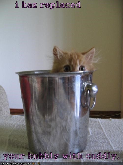 best of the week,bubbly,bucket,caption,captioned,cat,champagne,cuddly,Hall of Fame,hiding,kitten,replaced,tabby