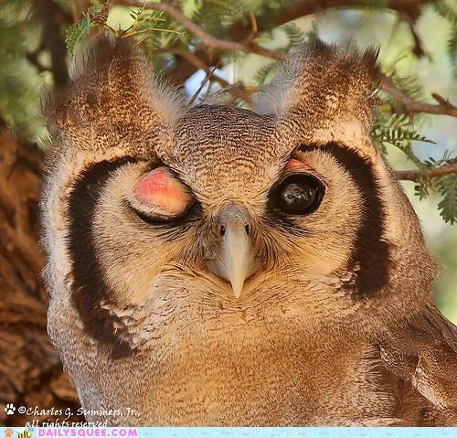 acting like animals,arrested development,impersonating,impression,lucille,Owl,totally looks like,winking