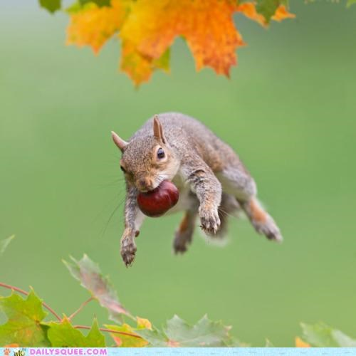 Acting Like Animals: A Different Kind of Flying Squirrel