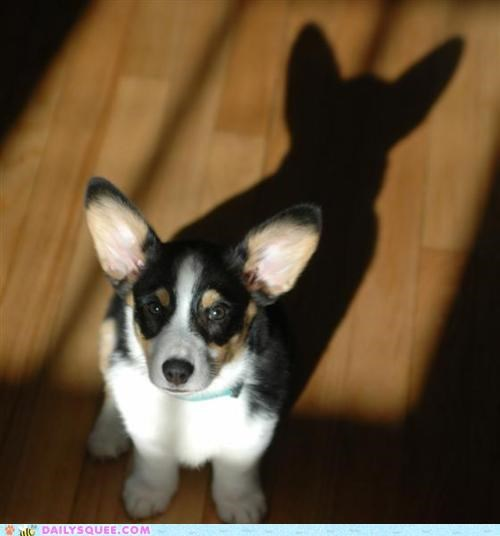 Acting Like Animals: The Darcorgi Knight