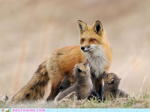 album,Babies,baby,excited,fox,fox confessor brings the flood,foxes,kit,kits,maybe sparrow,neko case,title