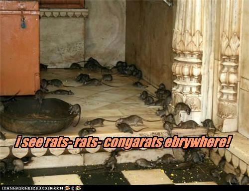 i see rats- rats- congarats ebrywhere!