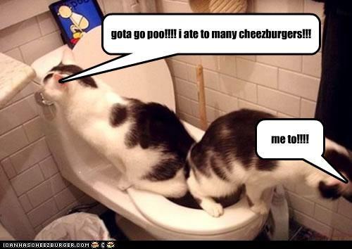 gota go poo!!!! i ate to many cheezburgers!!!
