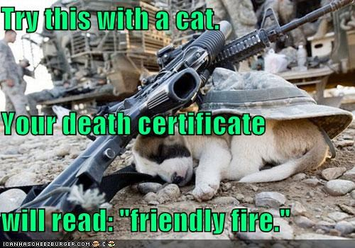 "Try this with a cat. Your death certificate will read: ""friendly fire."""
