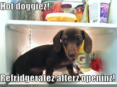 Hot doggiez!  Refridgeratez afterz openinz!