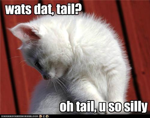 Tail talk