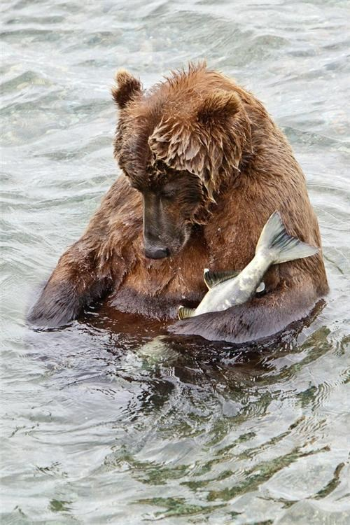 Stuffed Bear of the Day