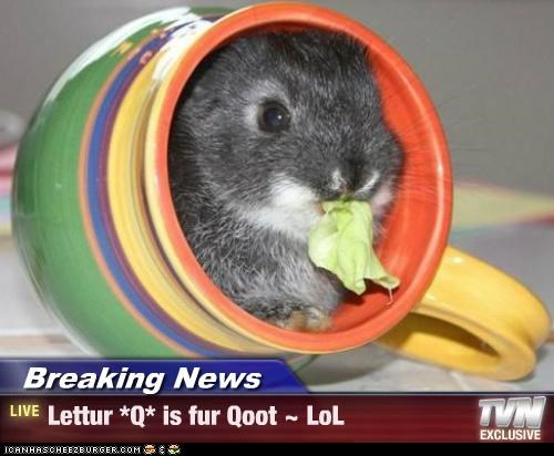 Breaking News - Lettur *Q* is fur Qoot ~ LoL
