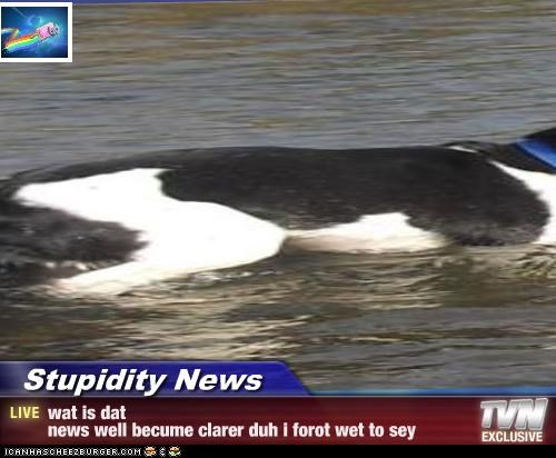 Stupidity News - wat is datnews well becume clarer duh i forot wet to sey