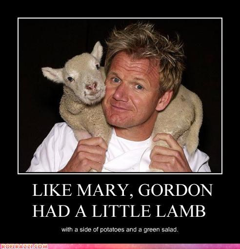 LIKE MARY, GORDON HAD A LITTLE LAMB