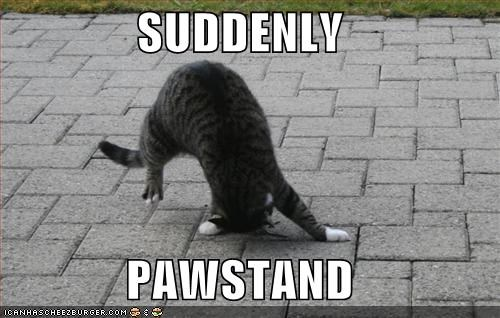 SUDDENLY  PAWSTAND