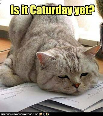 Is it Caturday yet?