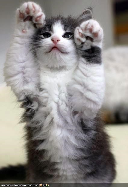 Cyoot Kitteh of teh Day: Dubble Hi-5z!!!