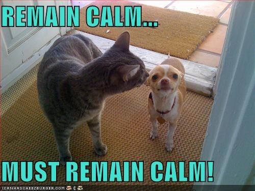 REMAIN CALM...  MUST REMAIN CALM!
