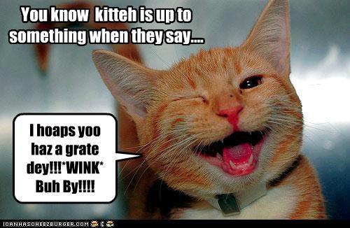 You know  kitteh is up to something when they say....