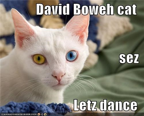 David Boweh cat sez Letz dance