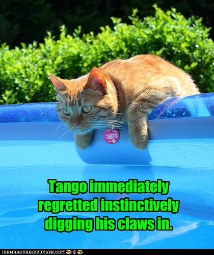 caption,captioned,cat,claws,digging,immediately,in,instinct,instinctively,pool,problem,regret,tabby