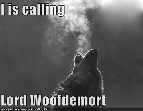 Harry Potter,howling,Lord Voldemort,Lord Woofdemort,wolf