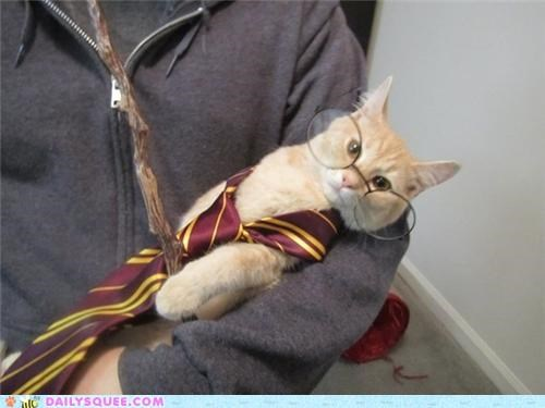 acting like animals,annoyed,avada kedavra,cat,costume,dressed up,ending,epilogue,Harry Potter,harry potter and the deathly hallows,killing curse,pun,real,spell
