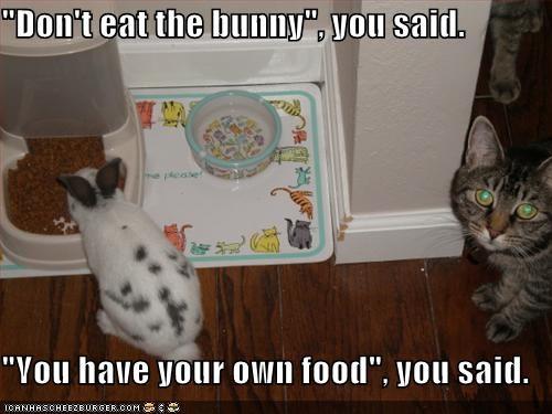bunny,caption,captioned,cat,dont,eat,food,human,liar,thief