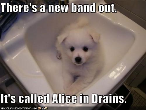 alice in drains,band,bathroom,great pyrenees,pun,puppy,sink